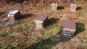養蜂家の方の巣箱が30箱以上盗難されました泣き寝入りになりそう許せません!